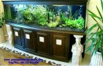 aquarium minimalis model terbaru